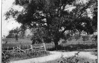 """""""Willow Tree Corner"""", Viola, NY"""